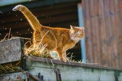 Pomarańczowa kot pozycja na frachcie zdjęcia royalty free