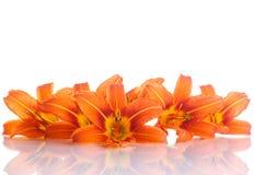Pomarańczowa leluja Zdjęcia Royalty Free
