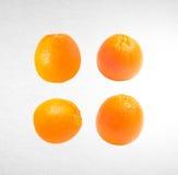 pomarańczowa lub inkasowa pomarańcze na tle Obraz Royalty Free