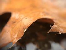 Pomarańczowa tekstura liść Zdjęcie Stock