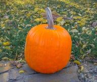 Pomarańczowe banie w zielonej trawy słońcu jaskrawym Jesieni żniwa Halloween lub dziękczynienie Piękny dojrzały bani zbliżenie na Zdjęcia Stock