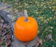 Pomarańczowe banie w zielonej trawy słońcu jaskrawym Jesieni żniwa Halloween lub dziękczynienie Piękny dojrzały bani zbliżenie na Zdjęcie Royalty Free