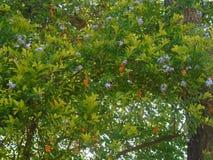 Pomarańczowe jagody i błękitów kwiaty zdjęcie royalty free