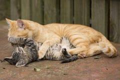 Pomarańczowe kot sztuki z figlarką obrazy stock