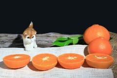 Pomarańczowe mandarynki lub tangerine owoc z zielonymi liśćmi i małym kotem na drewnianej deski tle, zdjęcia royalty free