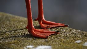 Pomarańczowe nogi Ciskający cień Zdjęcia Stock