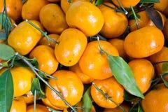 Pomarańczowe pomarańcze Fotografia Stock
