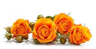 Pomarańczowe róże Obrazy Royalty Free