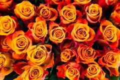 Pomarańczowe róże Obraz Stock