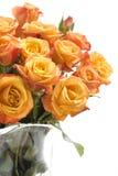 pomarańczowe róże Fotografia Royalty Free