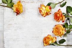 Pomarańczowe róże na białym drewnianym tle obrazy royalty free