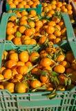 Pomarańczowe tangerine owoc w żniwo koszach z rzędu Zdjęcia Royalty Free