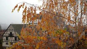 Pomarańczowi brzoza liście zakrywający mrozem zdjęcie wideo