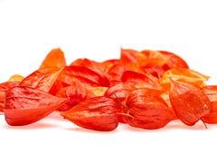 Pomarańczowi Chińscy lampiony & x28; Physalis& x29; Fotografia Stock