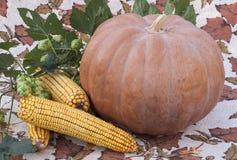Pomarańczowi dyniowi i kukurydzani cobs kłama następnie Zdjęcie Stock