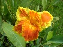 Pomarańczowi kwiaty, polek kropki Zakładają w błoniu Fotografia Stock