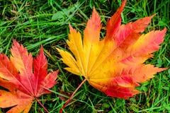 Pomarańczowi liście klonowi na zielonej trawie Fotografia Royalty Free