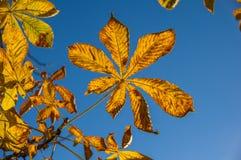 Pomarańczowi liście wieszają na gałąź drzewo w jesieni Fotografia Stock