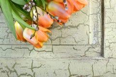 Pomarańczowi tulipany na jaskrawym - zielony rocznika tło obrazy stock