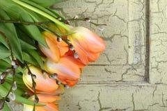 Pomarańczowi tulipany na rocznika tle zdjęcia stock