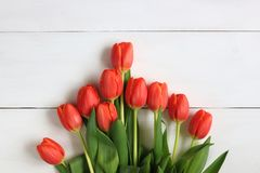 Pomarańczowi tulipany wystawiający na białym tle Obraz Stock