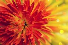Pomarańczowoczerwony kwiat fotografia royalty free