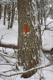 Pomarańczowy śladu blask na drzewie w lesie Zdjęcia Royalty Free