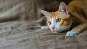 Pomarańczowy śliczny kot Obrazy Stock