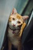 Pomarańczowy śliczny kot Obraz Stock