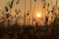 Pomarańczowy światło słońce ustawia przez trawy Obrazy Stock