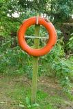 Pomarańczowy życie paska set w zielonym lesie Obrazy Royalty Free