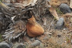 Pomarańczowy brązu kota obsiadanie i patrzeć oddolny fotografia royalty free