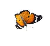 Pomarańczowy brown motyl na białym tle zdjęcia royalty free