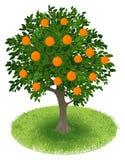 Pomarańczowy drzewo w zieleni polu ilustracja wektor