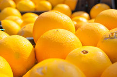 Pomarańczowy fruiit tło cytrusa cytrusów świeży grupowy pomarańczowy tangerine biel Rynek Obraz Royalty Free