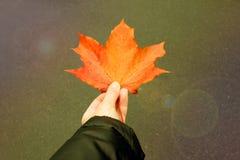 Pomarańczowy jaskrawy liść klonowy obrazy stock