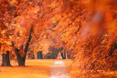 Pomarańczowy jesień park Zdjęcia Royalty Free