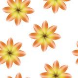 Pomarańczowy kolor żółty kwitnie, bezszwowy okresowy kwiecisty wzór, kwiaty, przejrzysty tło Fotografia Royalty Free