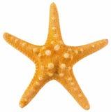 Pomarańczowy koral odizolowywający Zdjęcia Royalty Free