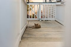 Pomarańczowy kot odpoczywa na ganeczku dom z gnuśną twarzą fotografia royalty free