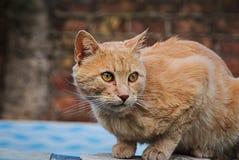 Pomarańczowy kot szczęśliwy w naturze Fotografia Stock