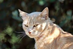 Pomarańczowy kot szczęśliwy w naturze Obrazy Stock