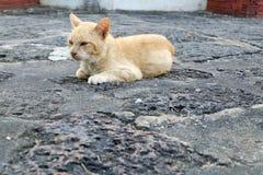Pomarańczowy kota zakończenie up Fotografia Stock