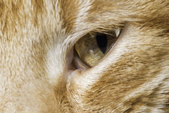 Pomarańczowy kota zakończenie up ono przygląda się Obrazy Stock