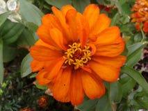 Pomarańczowy kwiat 06 obrazy royalty free