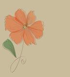 Pomarańczowy kwiat karty wzór Obrazy Royalty Free
