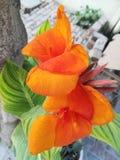 Pomarańczowy kwiat, piękni pomarańczowi colour kwiaty zdjęcie stock