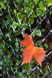 Pomarańczowy liść Obrazy Stock