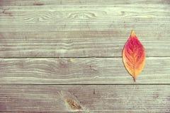 Pomarańczowy liść Na Wspaniałym Drewnianym tekstury tapety hd Obraz Royalty Free