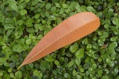 Pomarańczowy liść na zielonym tle Zdjęcie Royalty Free